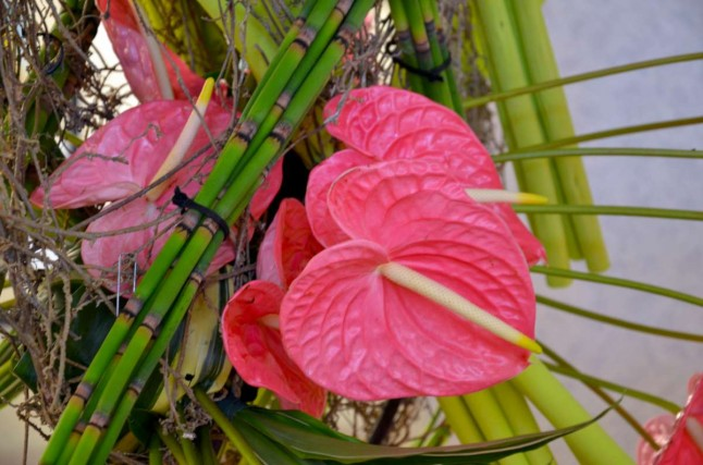 Pink Anthurium with Bamboo