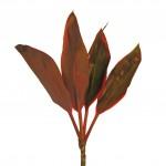 Red-Ti-Leaf