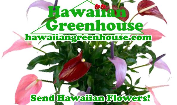 Anthurium Nurseries Big Island