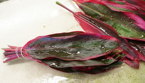 Varigated Red Ti Leaf